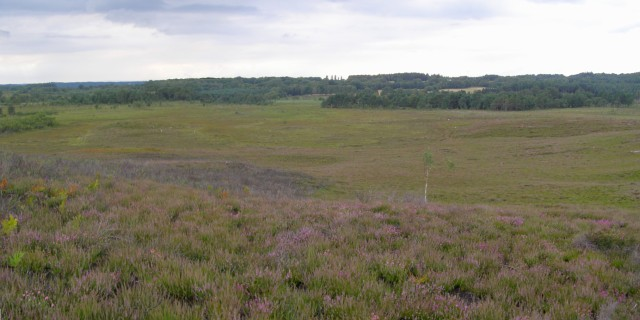 Kingston Great Common and Bagnum Bog, New Forest