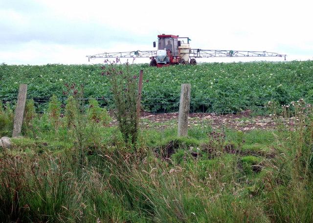 Spraying the potato crop