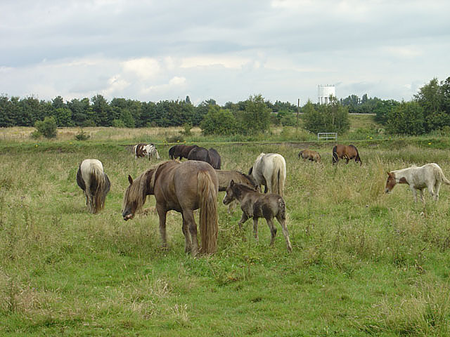 Travellers' horses