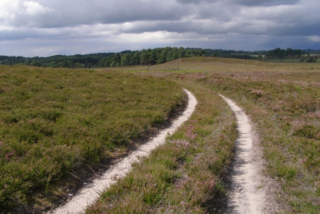 Track on Kingston Great Common, New Forest