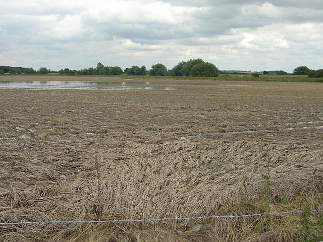Devastated crop