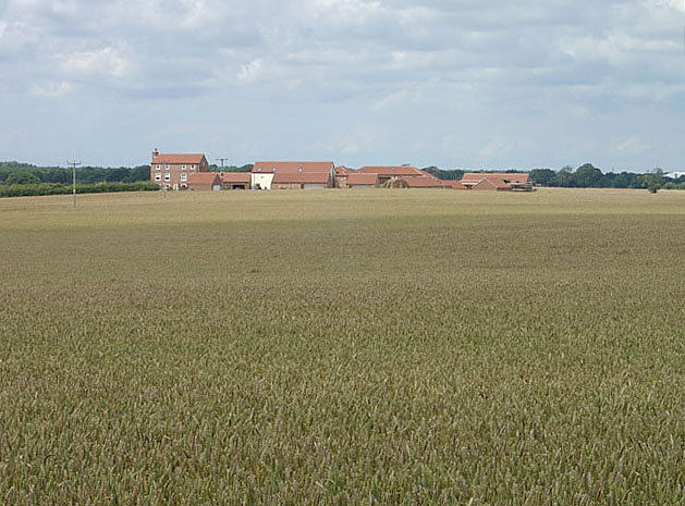 Cornfield looking across to Norwith Hill