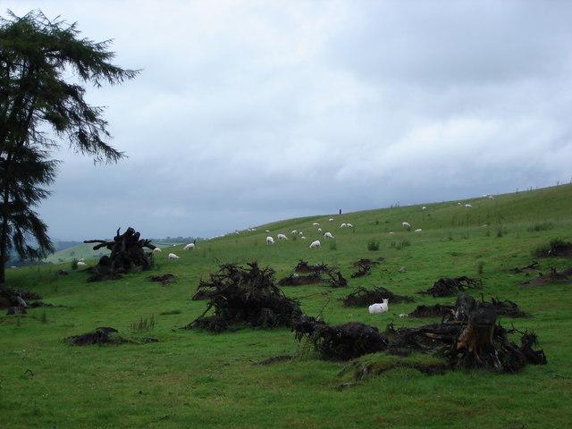 Start of the Kerry Ridgeway