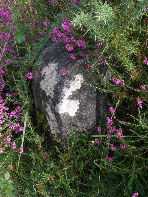Boundary marker stone, Lugden Barrow, New Forest
