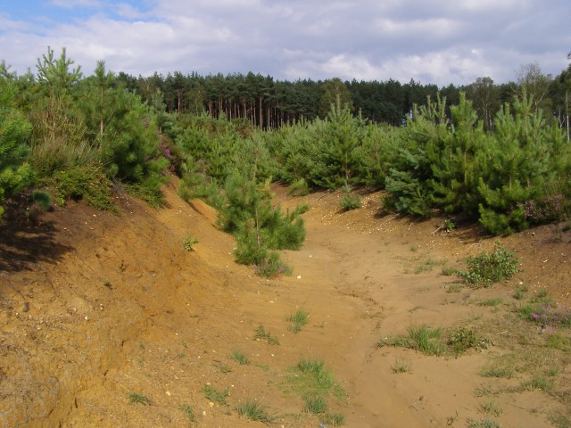 Sandy gulley, Dur Hill Inclosure, New Forest