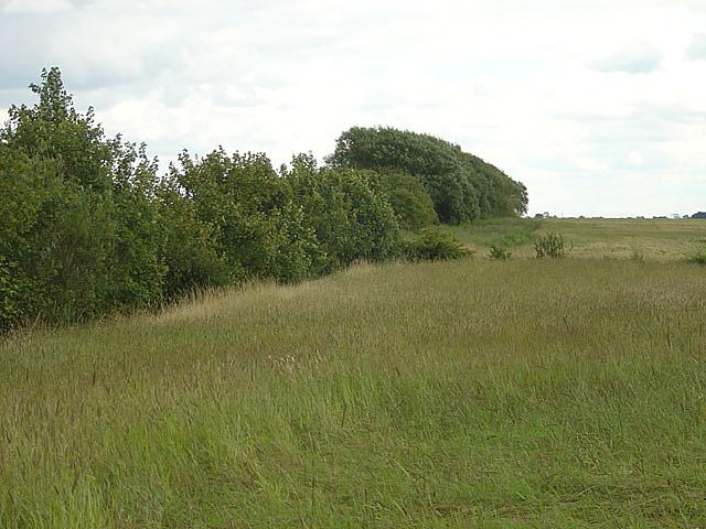 Farmland near Austerfield