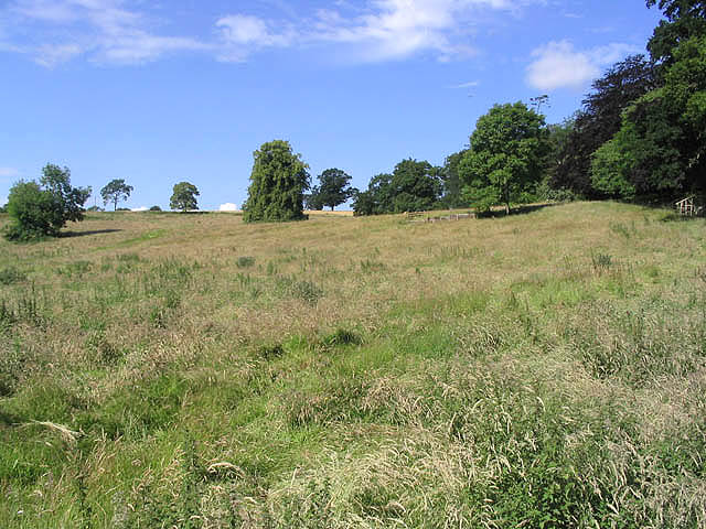 Rough grazing field at Chapel on Leader