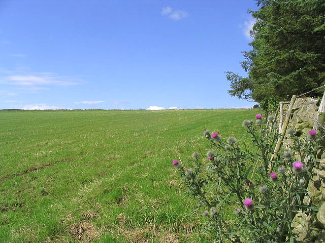 Farmland on Kedslie Hill