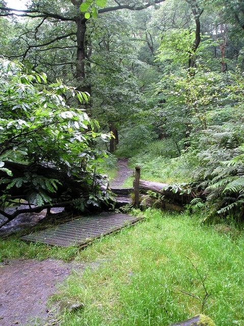 Path through Holme Wood