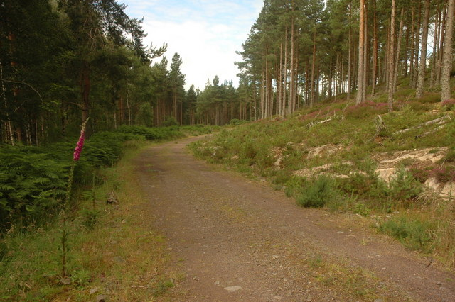 unmarked forest track