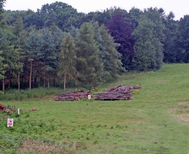 Timber Thinning in Mausoleum Woods