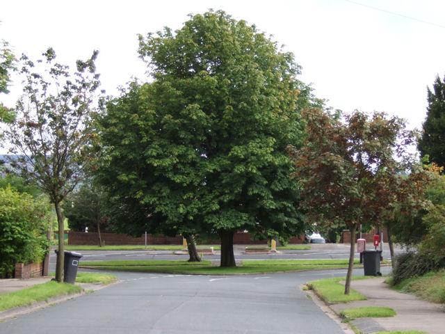 Tree at Bradley Road / Park Hill