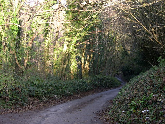 Minor Road through a Wooded Valley