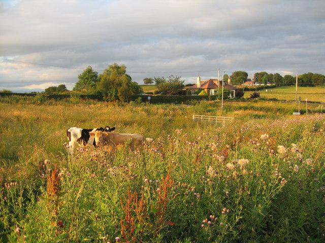 Varied pasture