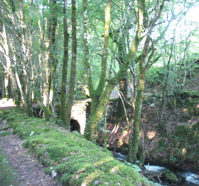 Track bridge in Planfa Fawr Plantation