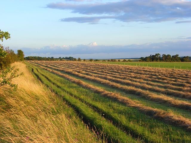 Mown hay near Blewbury