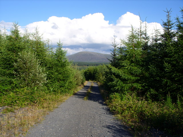 Forestry road .