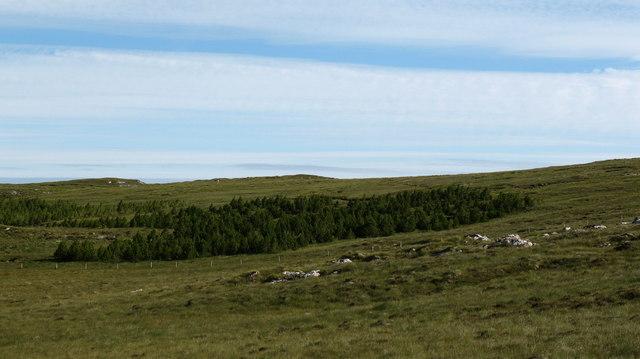 Conifer plantation, Beinn a Bhuna