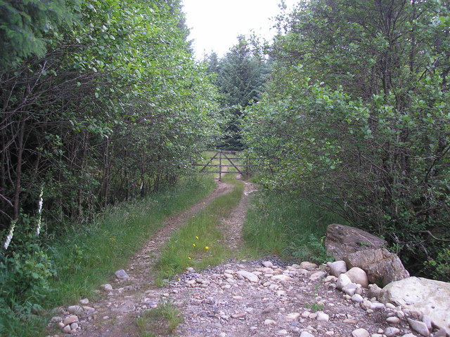 Forest Track and Gate