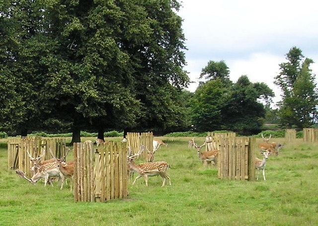 Deer in Dunham Park