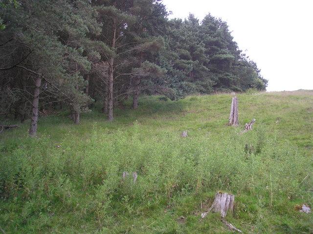 Edge of the Wood