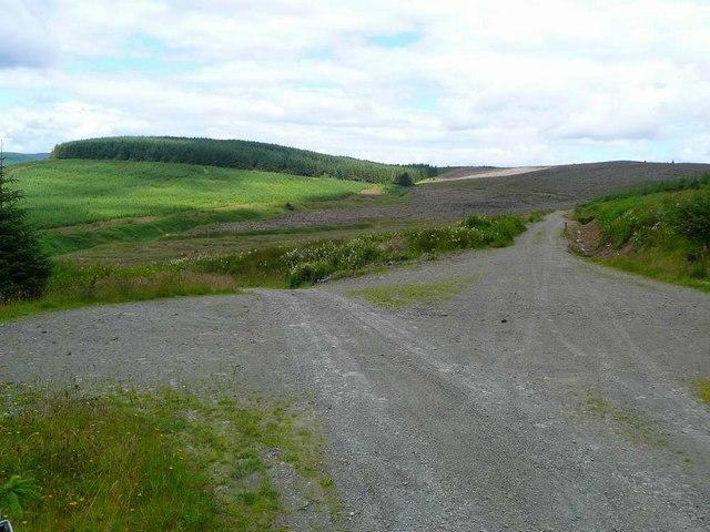 Track junction in the Eskdalemuir Forest