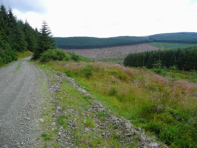 Track in the Eskdalemuir Forest