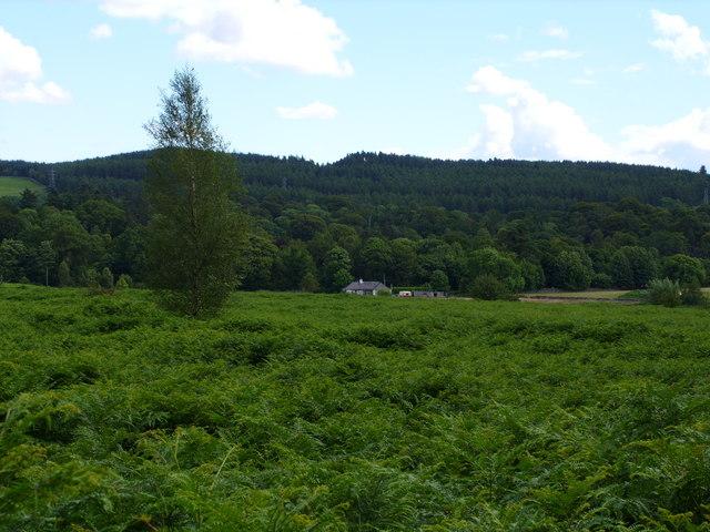 Cottage  on Cumloden Estate