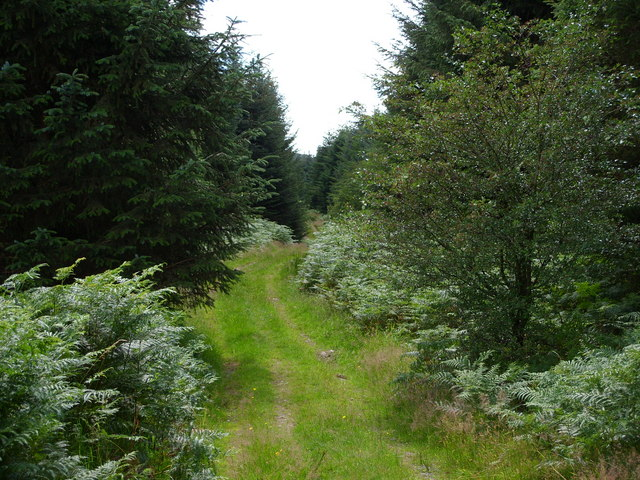 Footpath in Knockman Woods
