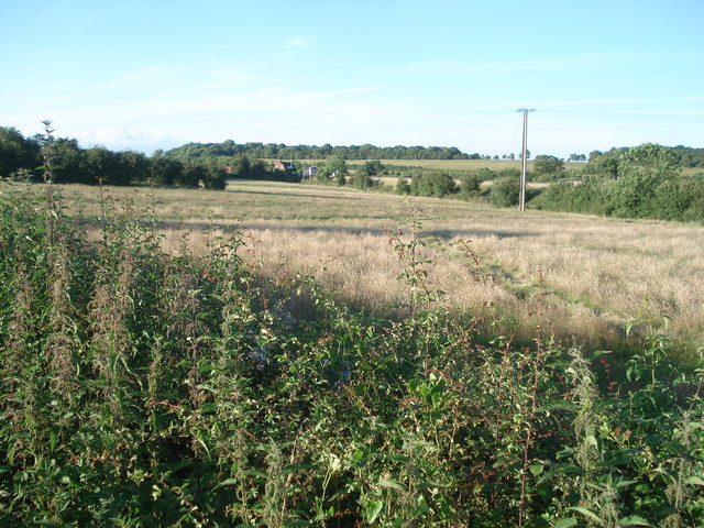 Oddingley meadow