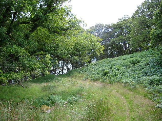 Garlies Woods