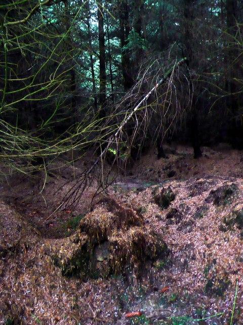 Through a forest darkly