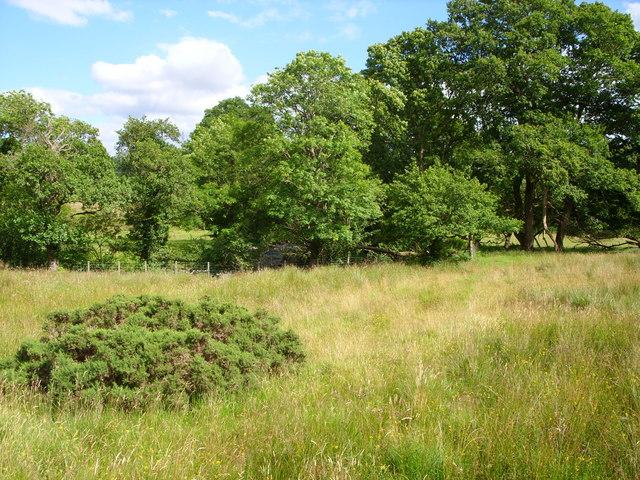 Field beside the Penkiln Burn