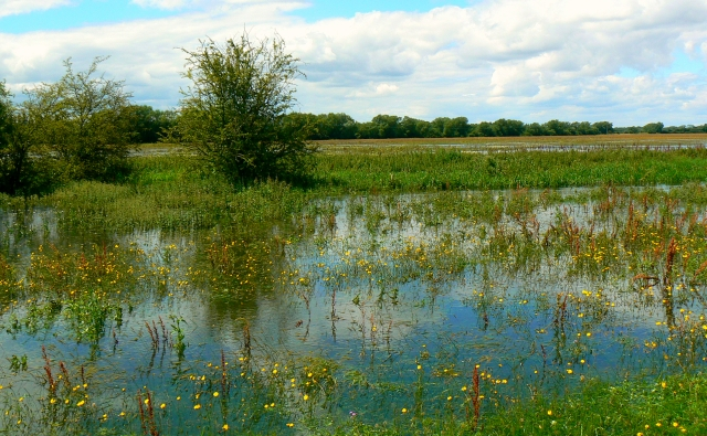 Water meadow, Cricklade