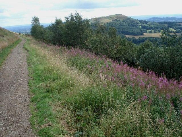 Western flank path on Pinnacle Hill
