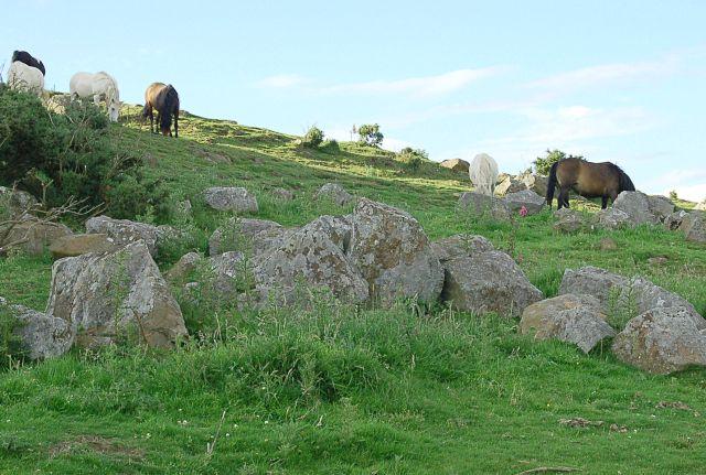 Drumcarrow grazing