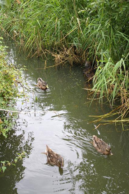 Watery Habitat