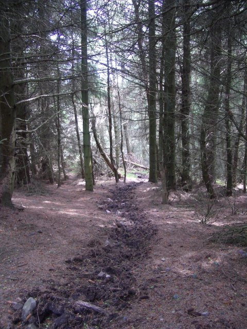 Forest, Meigle Hill