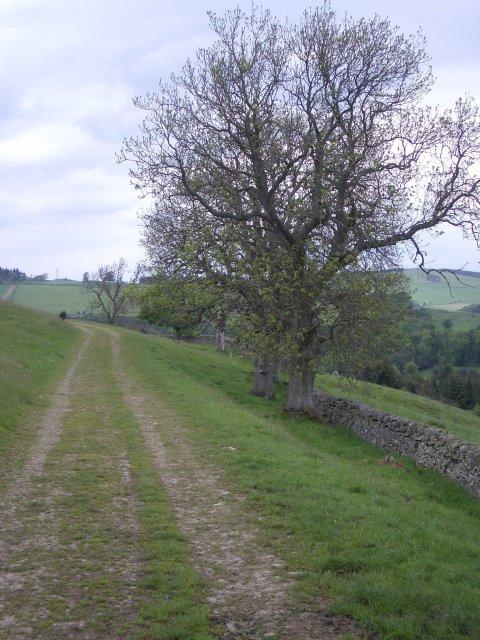 Track, Meigle Hill