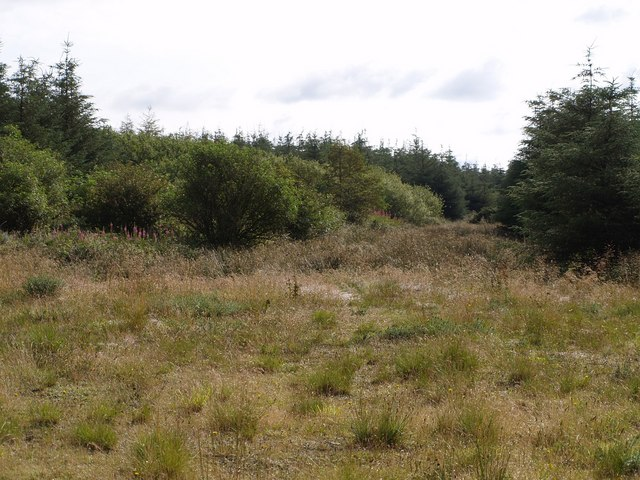 Woodland near Hardisworthy