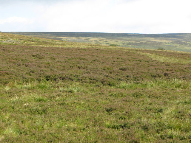 Moorland north of Rookhope