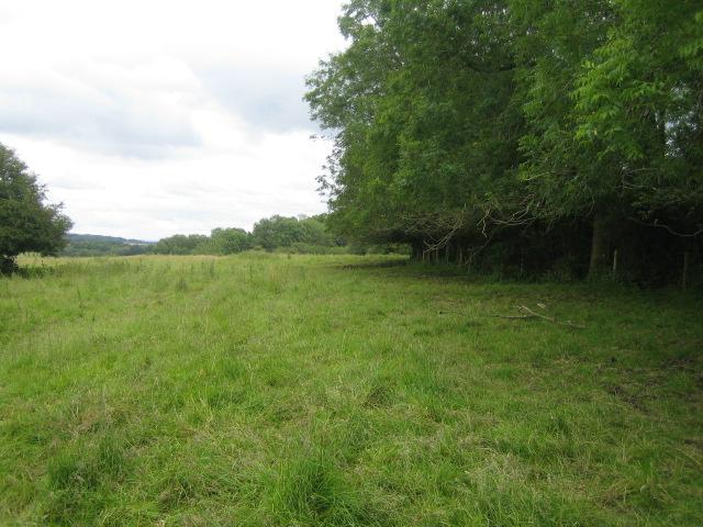 Fields and wood near Stockton