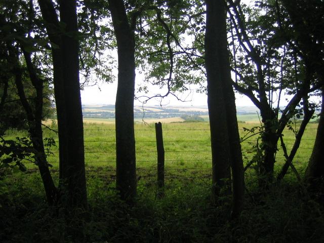 Downland from byway, Stockton Wood, near Stockton
