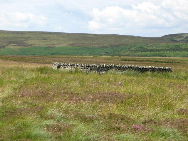 Sheepfold on Harwoodshield Fell