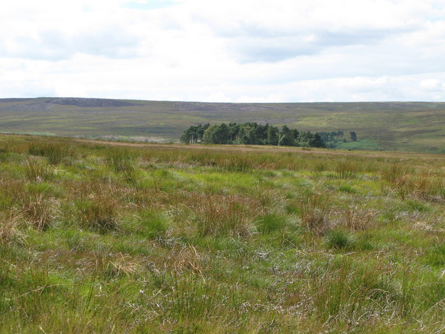 Harwoodshield Fell
