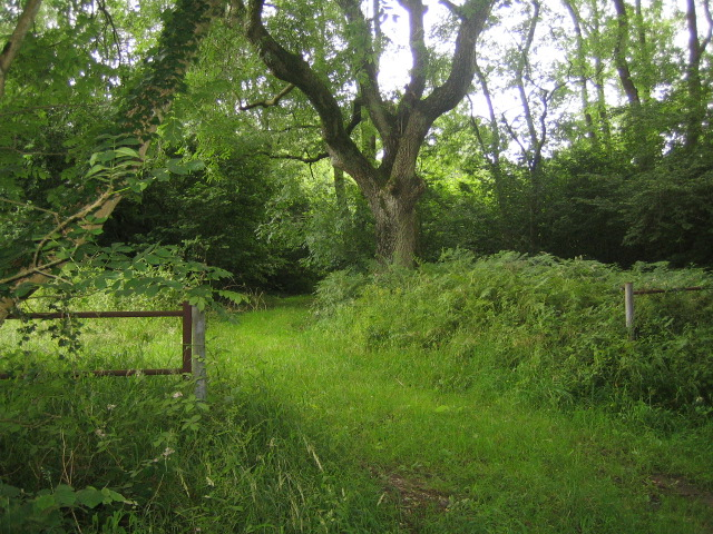 Stockton Wood near Stockton