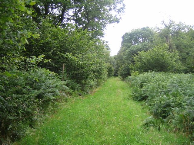 Stockton Wood near Stockton 3