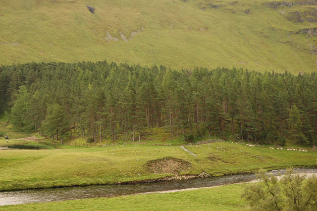 River Findhorn and sheep