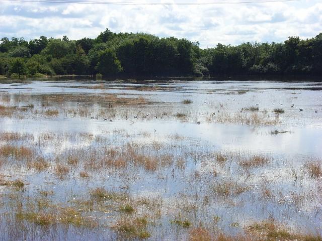 The Loddon floodplain, Woodley