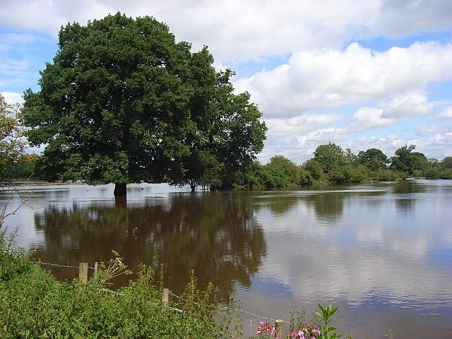The Loddon floodplain, Sindlesham